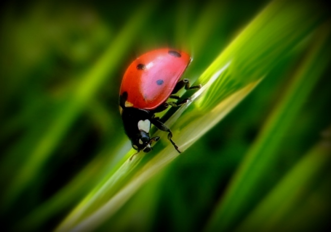 lady-bug-5